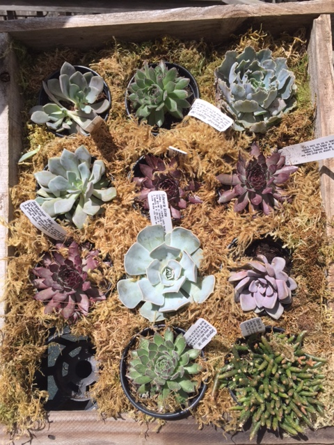 Earth Day - Succulents